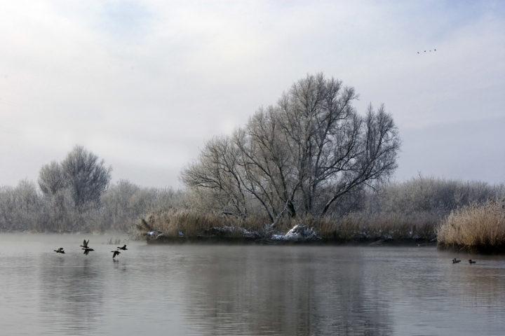 Winterlandschap Biesbosch