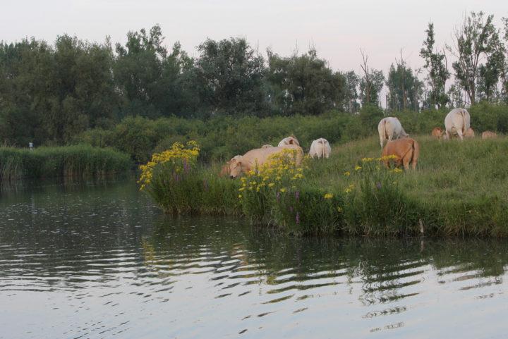 Graslandschap