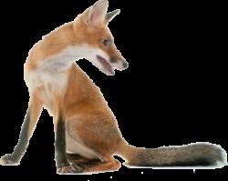 Dierenvriendjespad Pannekoek